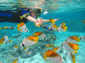 Rarotonga underwater snorkling in cook islands oceania south pacific Stock Photo