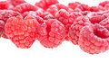 Rasberries Stock Photos