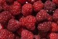 Raspberries Royalty Free Stock Photos