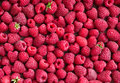 Raspberries background. Royalty Free Stock Photo