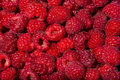 Raspberries background of fresh picked ripe Stock Photos