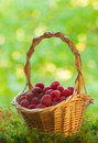 Raspberries in the basket Royalty Free Stock Photo