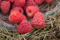 Raspberries in a basket Royalty Free Stock Photo