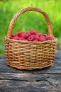 Raspberries in the basket fresh ripe organic wicker closeup Stock Photos