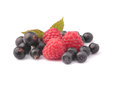 Raspberries, bilberries, black currant on a stand-alone backgrou Royalty Free Stock Photo