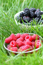Raspberries and blackberries Stock Image