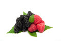 Raspberries and blackberry Royalty Free Stock Photos
