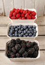 Raspberries, blueberries and blackberries in carton boxes Royalty Free Stock Photo