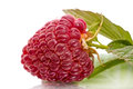 Raspberries close up on white background Royalty Free Stock Images