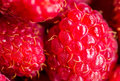 Picture : Raspberries   woman