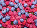 Raspberries and cowberries mix of juicy ripe Stock Images