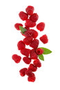 Raspberries fresh and delicious on white background Stock Photography