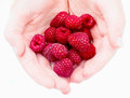 Raspberries in the hands white background Royalty Free Stock Photos