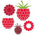 Raspberries isolated objects on white background vector illustration eps Royalty Free Stock Photo