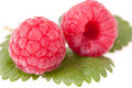 Raspberries Macro Royalty Free Stock Images