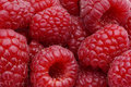 Raspberries macro Royalty Free Stock Photo