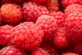Raspberries many fresh red making beautiful background Stock Image