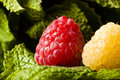 Raspberries and mint Royalty Free Stock Photography