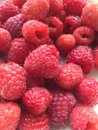 Raspberries on a plate in the summer Stock Images