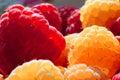 Raspberries (rubus idaeus). Royalty Free Stock Image