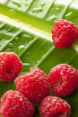 Raspberries Water Drops Leaf Background Stock Photo