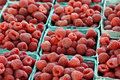 Raspberry background Stock Images