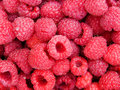 Raspberry berries Royalty Free Stock Photo