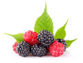 Raspberry and blackberry with green leaf Royalty Free Stock Images