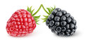 Raspberry and blackberry Royalty Free Stock Photo