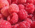 Raspberry close up - berry background Stock Images