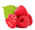 Raspberry close up isolated on white background Stock Photography