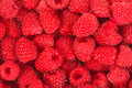 Raspberry close up for your design Stock Photo