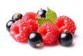 Raspberry with currant Royalty Free Stock Photo