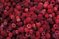 Raspberry fruit background. Huge pile of fresh raspberries Royalty Free Stock Photo