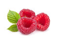 Raspberry fruit with leaf isolated on white Royalty Free Stock Photography