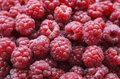 Raspberry heap of freshly collected appetizing closeup Stock Photography