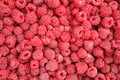 Raspberry hq photo of ripe red raspberries Royalty Free Stock Photo