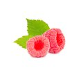 Raspberry isolated photo of raspberries with leaves on white Stock Photography