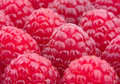 Raspberry macro background Royalty Free Stock Image