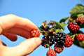 image photo : Raspberry