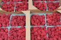 Raspberry Pints in Cardboard Flats Royalty Free Stock Photo