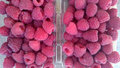 Raspberry red raspberry european rubus idaeus shrub producing juicy fruits with hollow base and center with numerous Stock Photo