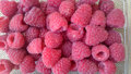 Raspberry red raspberry european rubus idaeus shrub producing juicy fruits with hollow base and center with numerous Stock Images