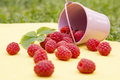 Raspberry spread on the table juicy red a wooden surface Stock Photography