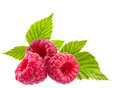 Raspberry on white Royalty Free Stock Image
