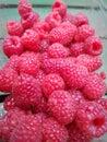 Rasberries in a pot Royalty Free Stock Photo