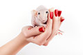 Rat on a hand with beautiful red manicure which sits Royalty Free Stock Photo