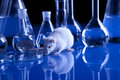 Rat in lab. Animal experiments Royalty Free Stock Image