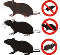 Rat rodent warning signs invasive animal and pest social mammal Royalty Free Stock Photography
