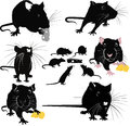 Rats of the mouse rodents animals cheese Royalty Free Stock Photo